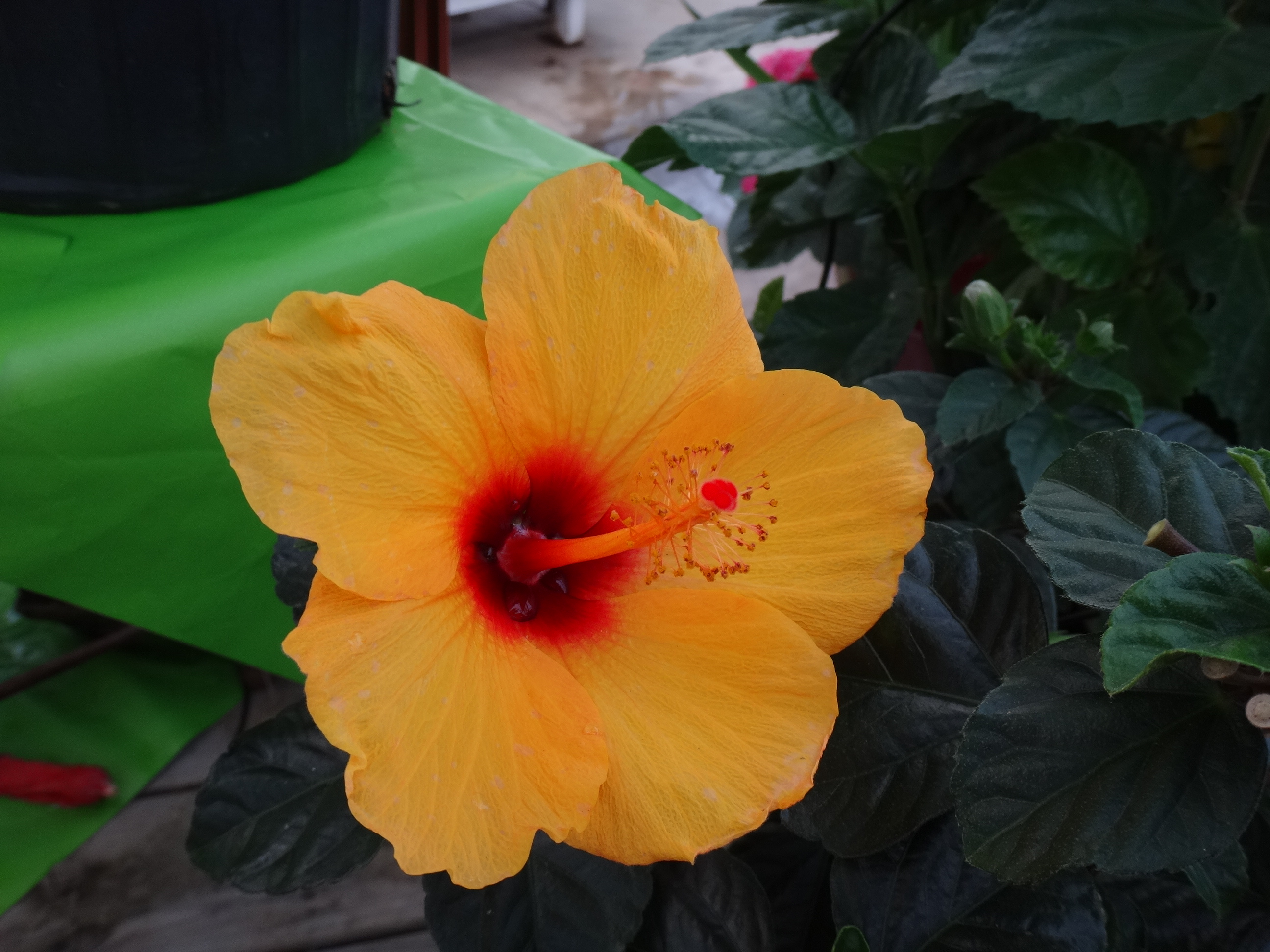 These pictures entailed a quick walk through of the local flower shop