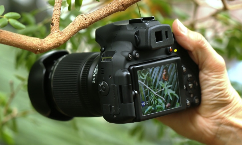 Fujifilm FinePix HS50 EXR Review - Taking on Simplicity at the Niagara  Butterfly Conservatory | Technology X